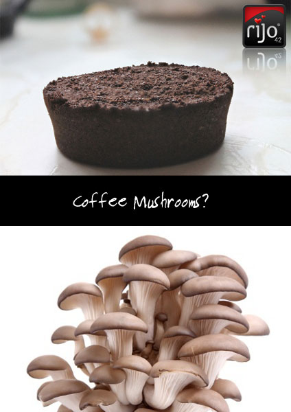 Growing Mushrooms With Coffee Grounds From Commercial Coffee Machines