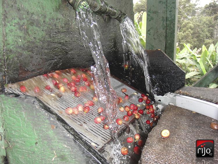 Coffee Cherry Processing