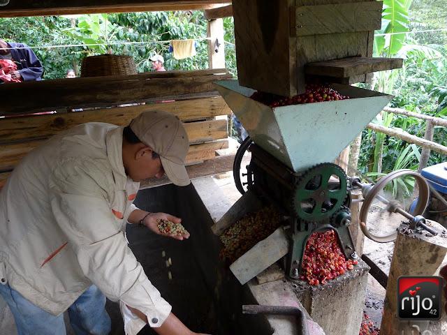 rijo42 Coffee Depulping