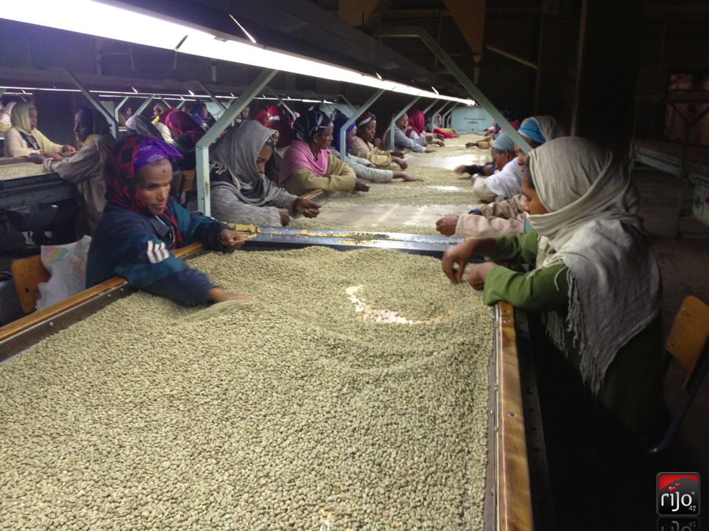 rijo42 Coffee Beans Grading